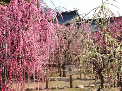 結城神社|観る・体験する|津市観光協会公式サイト レッ津ゴー旅ガイド